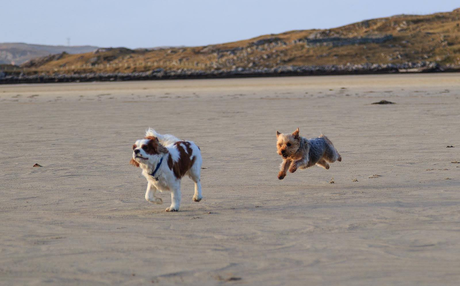 Why stories sell: A photo of my dogs on the beach, which makes me more relatable to my ideal client